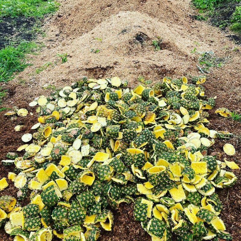 廃棄されていたものが、ジンジャーエールの原料、そして畑の堆肥作りにも使用される
