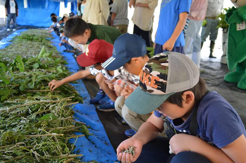 養蚕体験イベントで子どもたちが蚕に餌をあげる様子