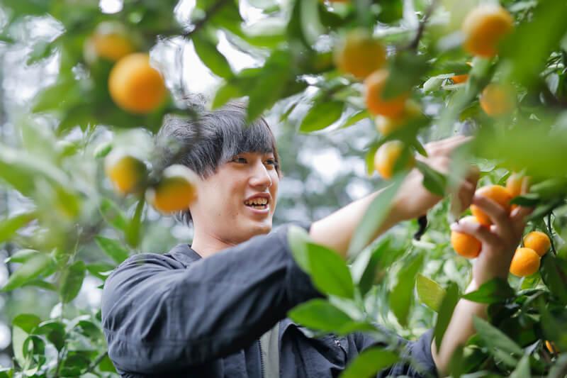 みかんを収穫する「紀州柑橘農園 善兵衛」7代目井上信太郎さん