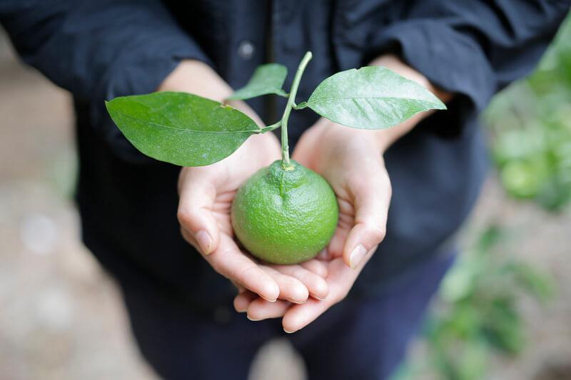 井上さんの手のひらに載せられた「紀州柑橘農園 善兵衛」のみかん