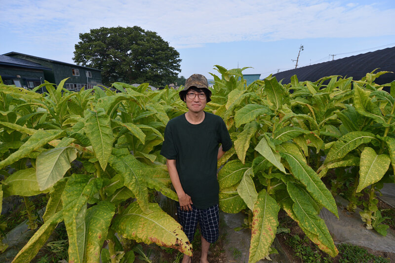 たばこ農園に立つ山谷金逸さん