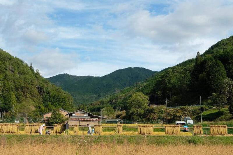 都会×田舎で力を合わせよう!岐阜の農村で稲刈りしながらゆる~く農村体験