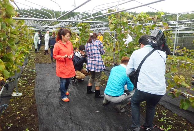 初めての収穫では「ブドウ収穫体験会」が行われた