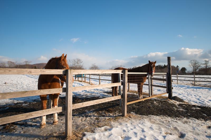 広大な牧場でのびのびと育った馬