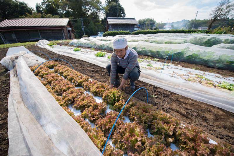 「コトコトファーム」古東さんと畑