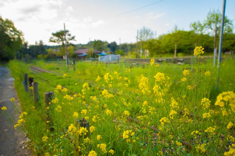 春には菜の花が咲くことでも有名な市原南部周辺