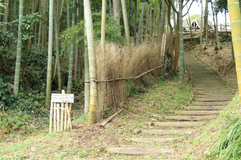 美山の竹林