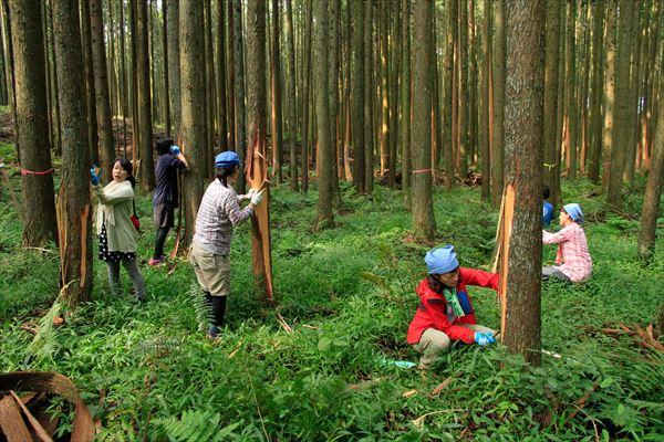 きらめ樹プロジェクト