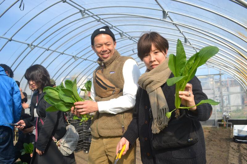 カッターで小松菜を収穫体験する参加者