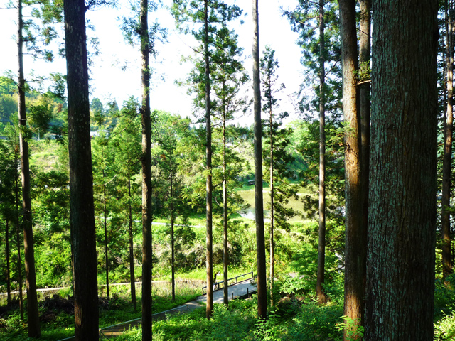 常陸太田市の林業