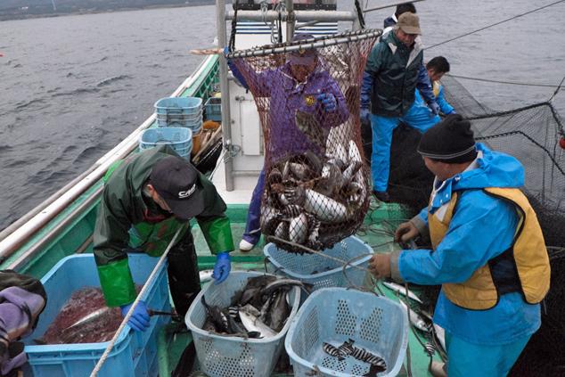 網を使い魚をすくいあげる