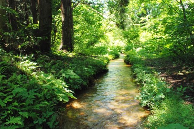 自然豊かな信濃町