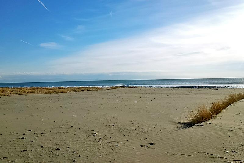 ▲穏やかな海辺は能登原さんお気に入りの散歩コース