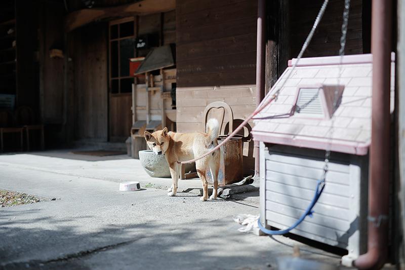 Bar IRORIの看板犬