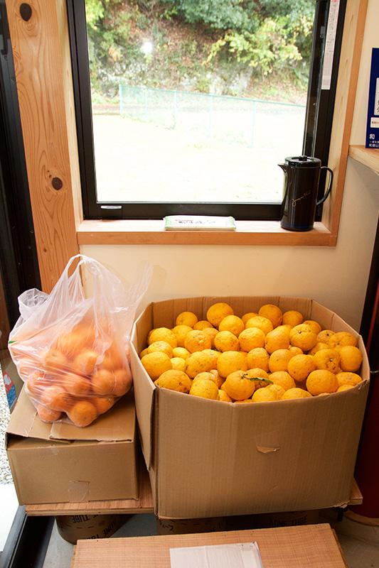 段ボールいっぱいの柚