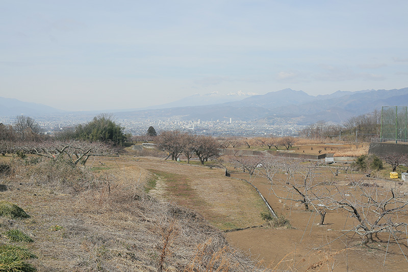 大野拓己さんの農地