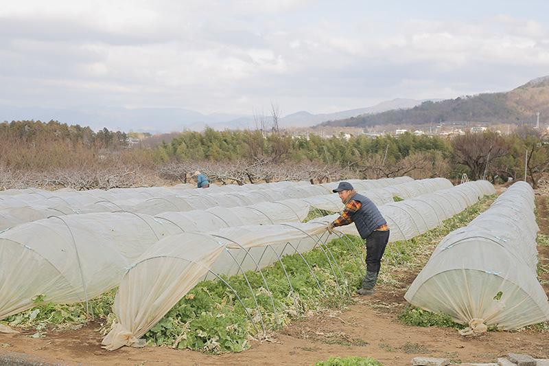 農作業をする大野さん(1)