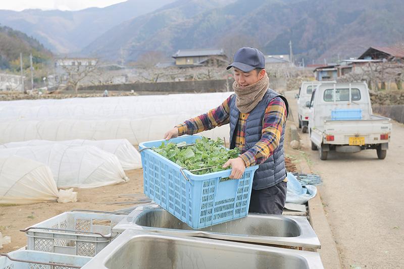 農作業をする大野さん(2)