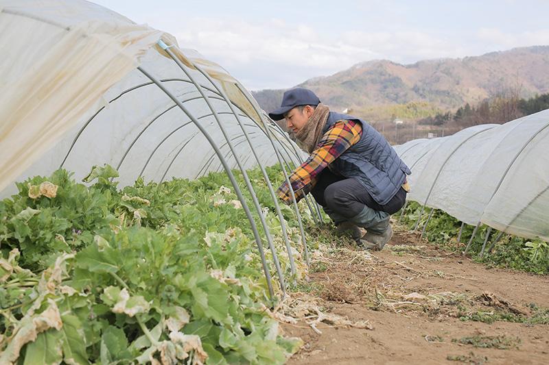 農作業をする大野さん(3)